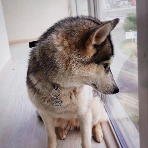 Жетоны для собак купить Киев